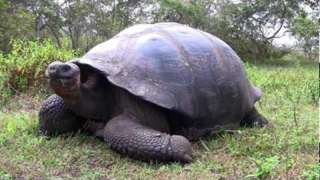 galpagos-giant-turtoise.jpg