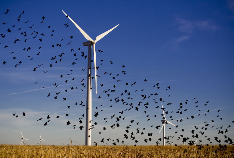Renewable Energy Kills A Lot Of Birds While Saving The