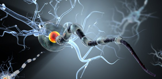 Multiple-Sclerosis-564x2762
