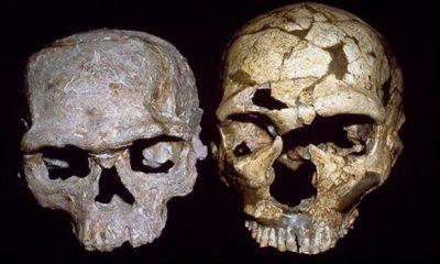 Homo sapien skulls from Jebed Irhoud